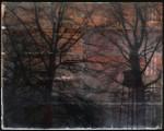 Autumn Gold, 8x10,encaustic mixed media