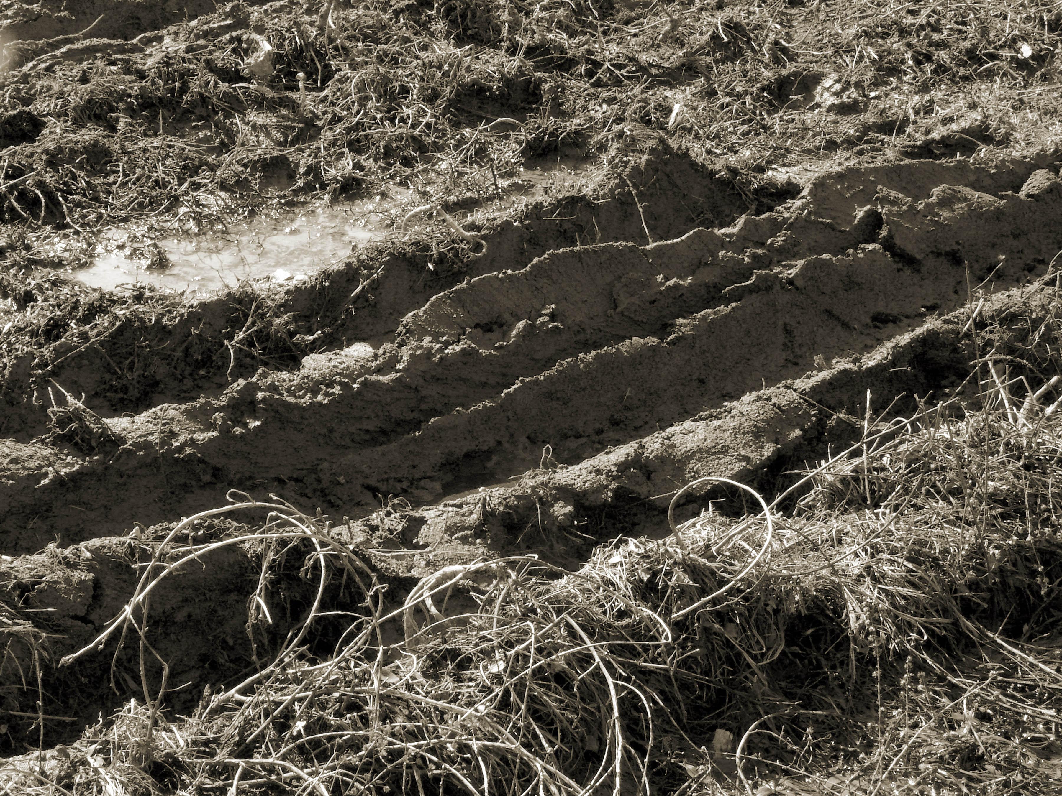 Mud Tracks, photograph