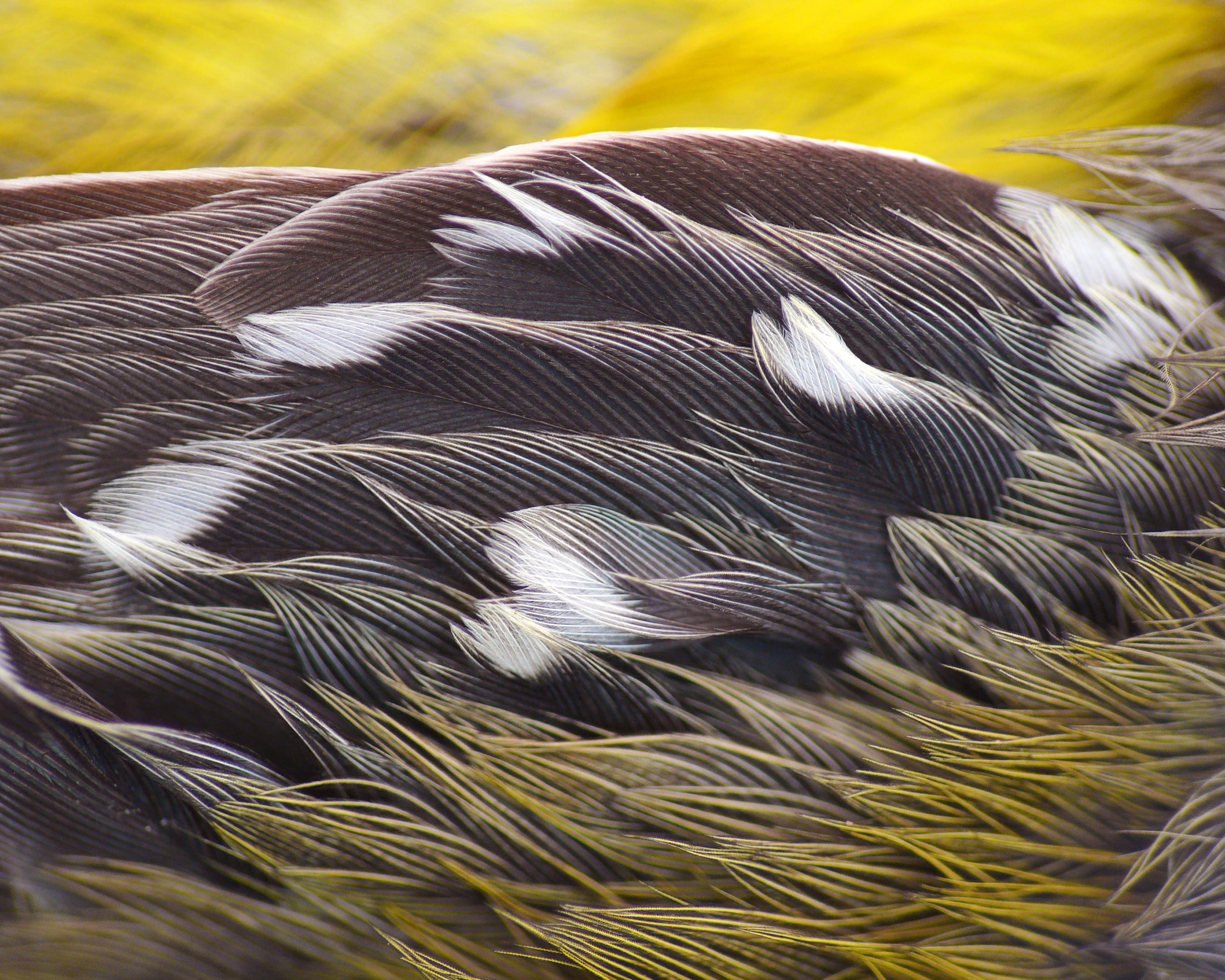 On the Wing of a Warbler, photograph